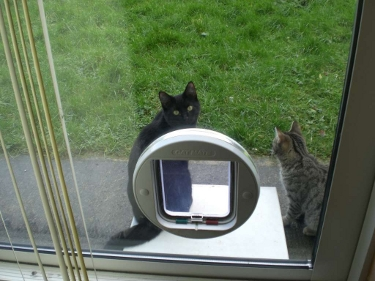 Cat flaps installed in Patio Doors